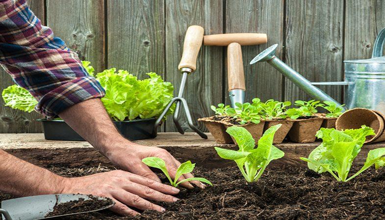 En quelle période faut-il commencer à planter son potager ?