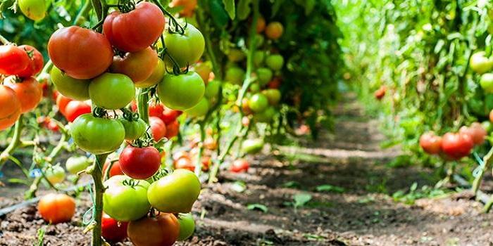 5 raisons de consommer bio
