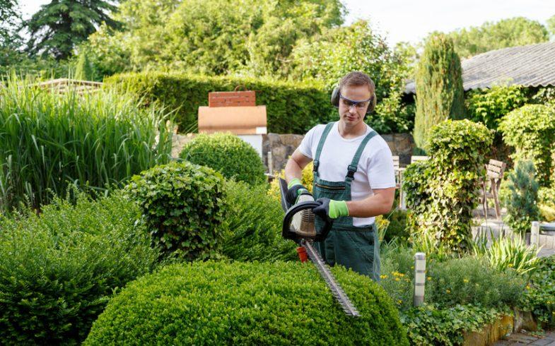 Coupe d'arbustes dans le jardin : quoi utiliser ?