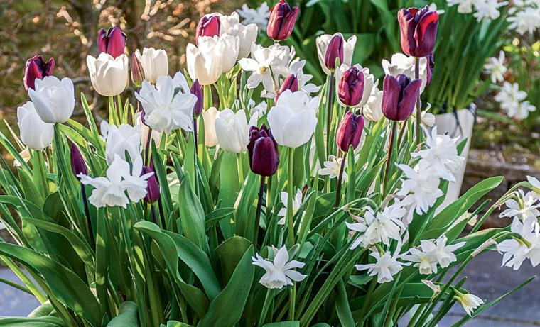 Créer une jolie jardinière de tulipe